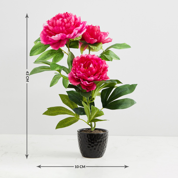 Valencia-Sachi Solid Three Peony in Ceramic Pot